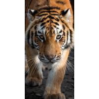 Osuška Tygr Bengálský