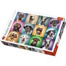 PUZZLE Psie portréty 1000 dielikov , Barva - Barevná
